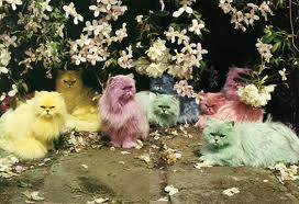 Tim Walker, Pastel Cats, 2000
